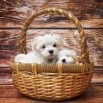 メス犬の超おしゃれな名前ランキングはコレ【2016版】