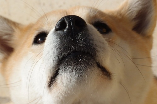 オス犬ランキング