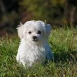 犬の名前ランキング!メスで超かわいい一押しとは?