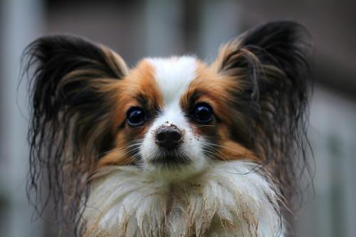 小型犬ランキング